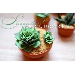 Kaktusi #2